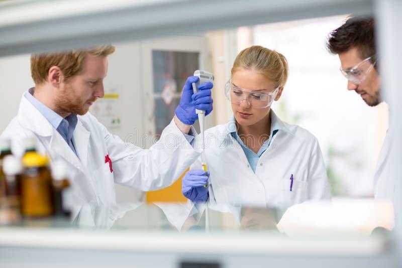 Gruppe der chemischen Wissenschaftlerplatzprobe der Flüssigkeit im Test pipettieren stockfoto