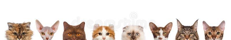 Gruppe der geernteten Ansicht der Katzenköpfe stockbilder