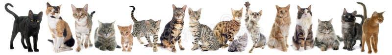 Gruppe der Katze lizenzfreie stockbilder