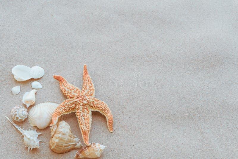 Gruppe der schönen Muschel und Starfish auf Sandy-Strand lizenzfreie stockfotos