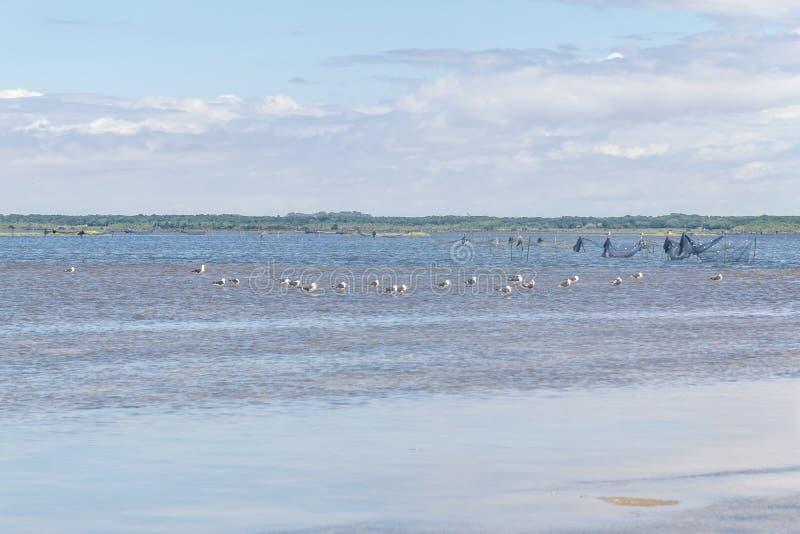 Gruppe der Seemöwe stockbild