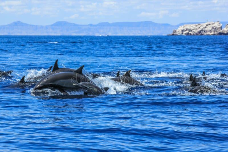 Gruppe des Delphinspringens lizenzfreie stockbilder