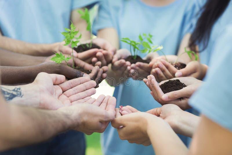Gruppe des Freiwilligen mit Sprössling für das Wachsen stockfotos