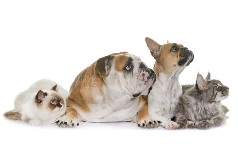 Gruppe des Haustieres stockfotos