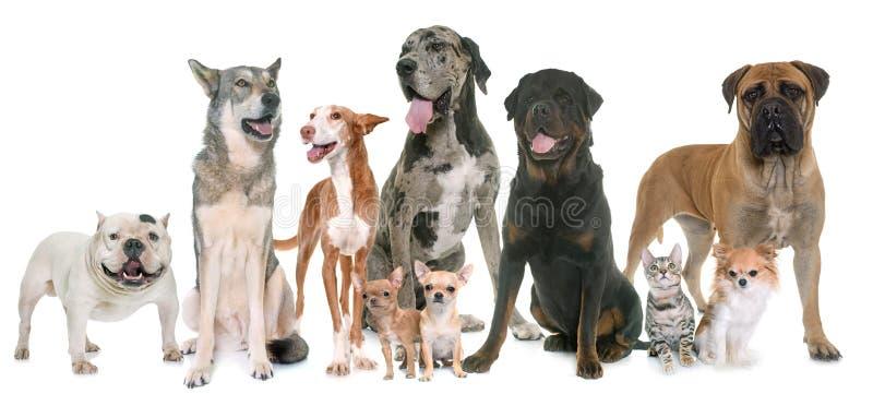 Gruppe des Haustieres stockfoto