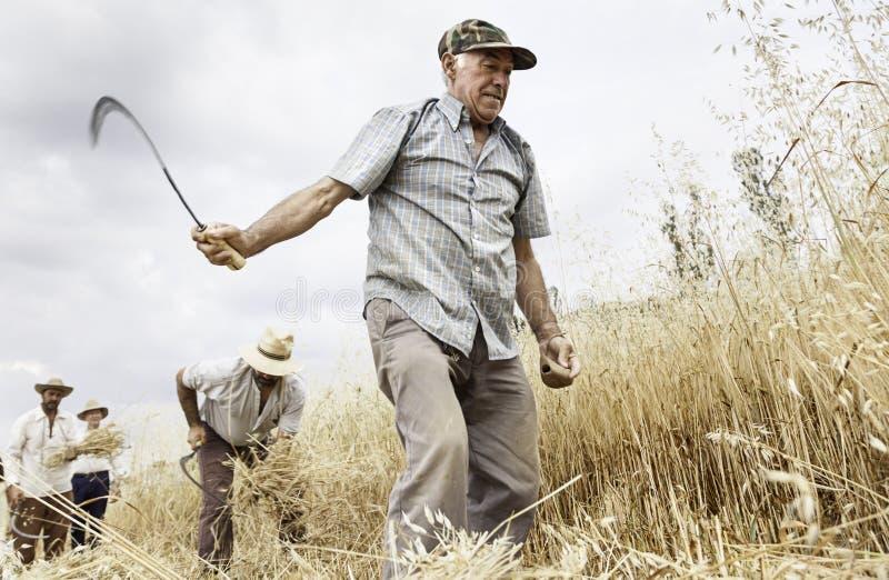 Gruppe des Landwirtarbeitens lizenzfreie stockfotos