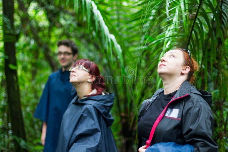 Gruppe des Touristen wandernd in den Dschungel lizenzfreies stockfoto