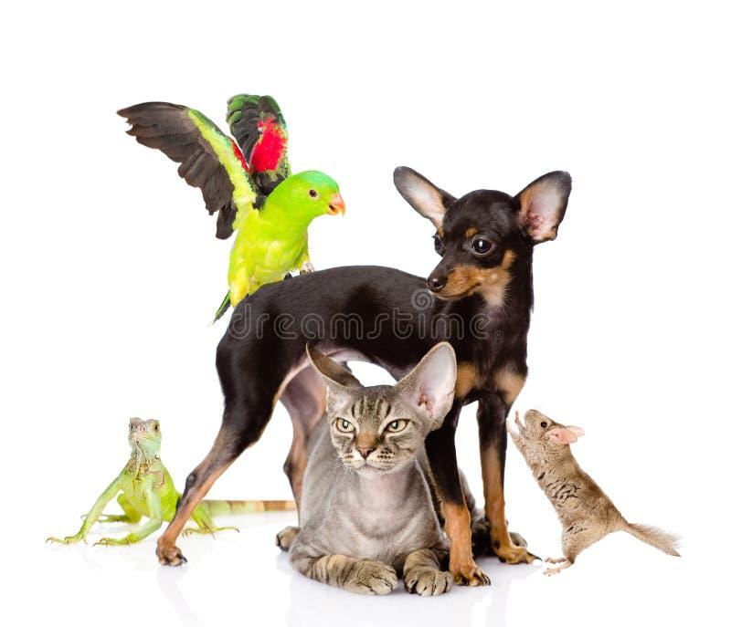 Gruppe exotische Haustiere Getrennt auf weißem Hintergrund lizenzfreie stockbilder