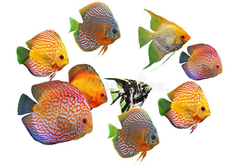Gruppe Fische lizenzfreie stockfotografie