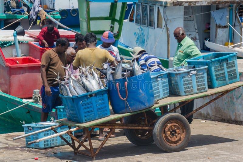 Gruppe Fischer an den Hafenladenfischen in den Körben stockfoto