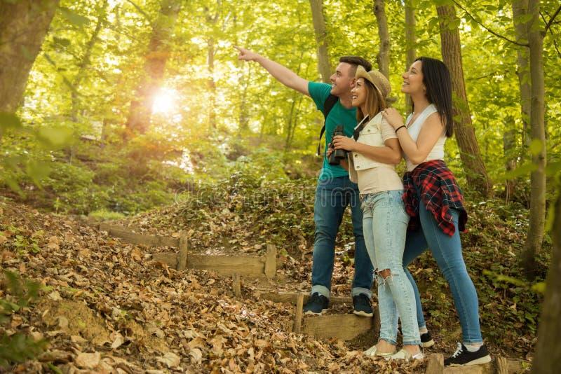 Gruppe Freunde, die durch den Wald wandern stockfotografie