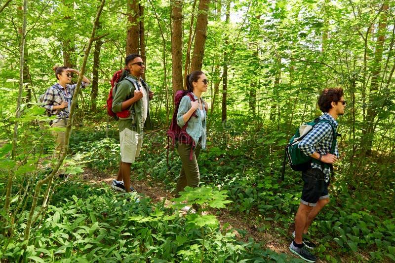 Gruppe Freunde mit den Rucksäcken, die im Wald wandern lizenzfreie stockfotos