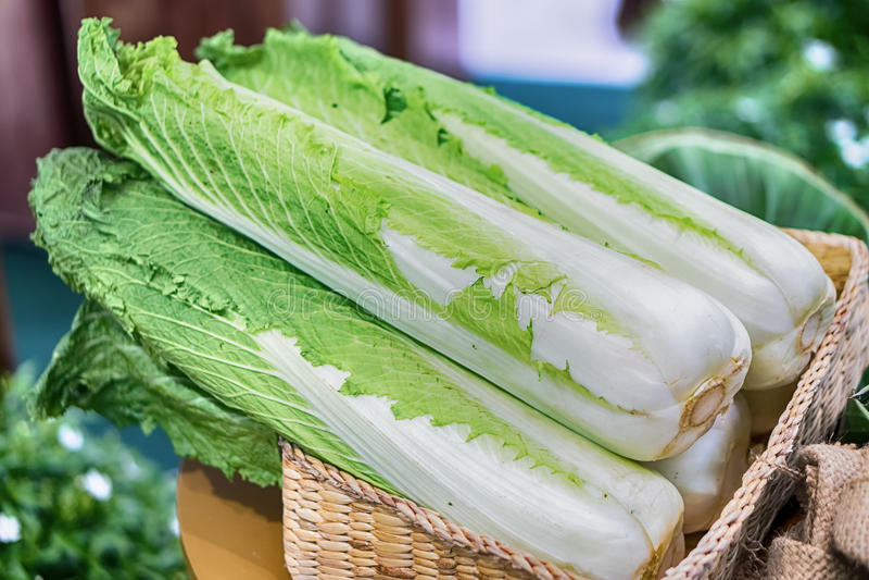 Gruppe frischer organisch angebauter frischer Römersalat stockfotos