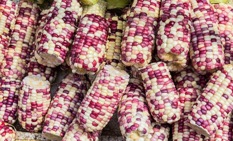 Gruppe frischer organischer Mais stockfotos