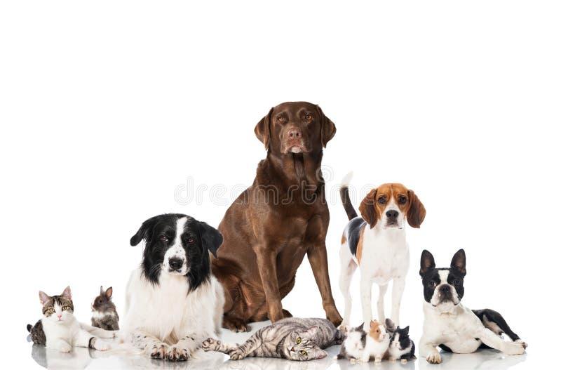 Gruppe Haustiere stockfotos