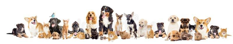 Gruppe Haustiere lizenzfreie stockfotos