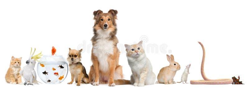 Gruppe Haustiere, die vor weißem Hintergrund sitzen stockbilder