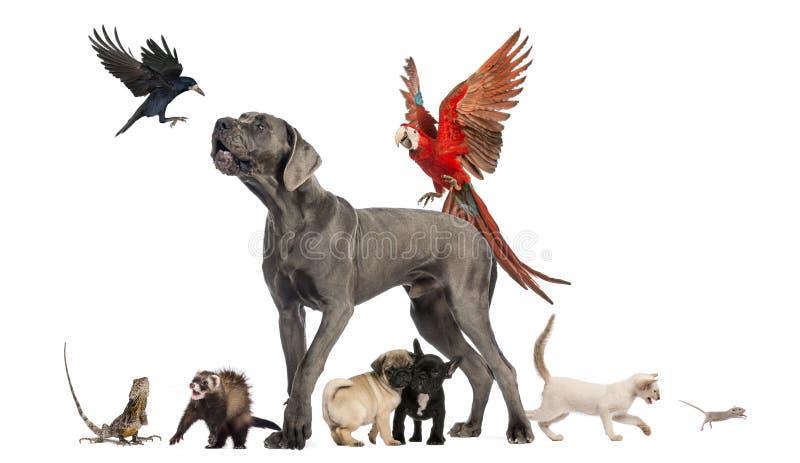 Gruppe Haustiere - Hund, Katze, Vogel, Reptil, Kaninchen