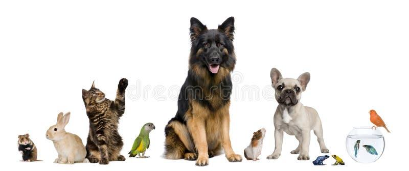 Gruppe Haustiere zusammen lizenzfreies stockbild