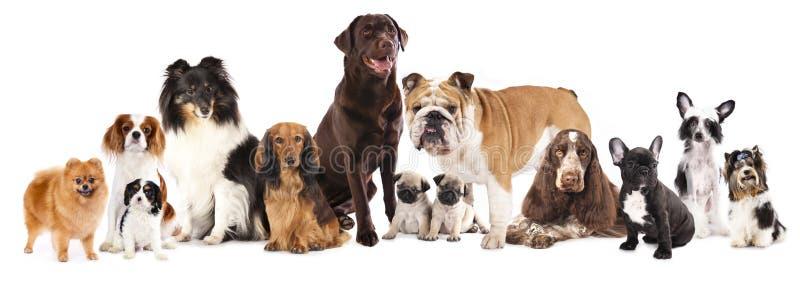 Gruppe Hunde stockbild
