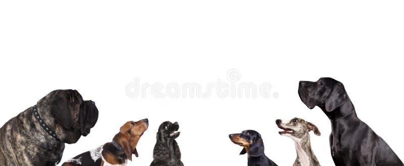 Gruppe Hunde stockbilder