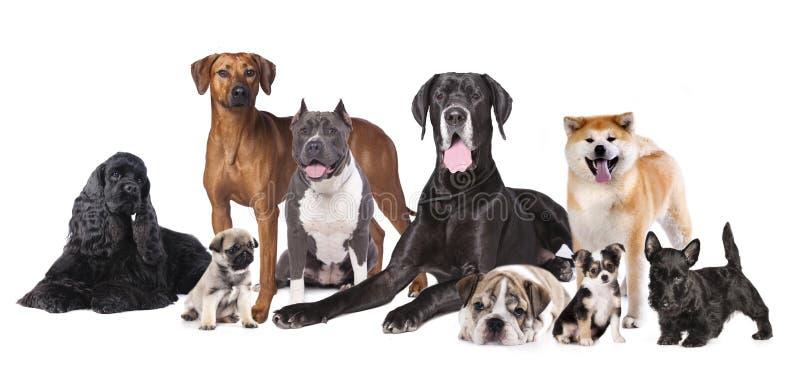 Gruppe Hunde lizenzfreie stockfotos
