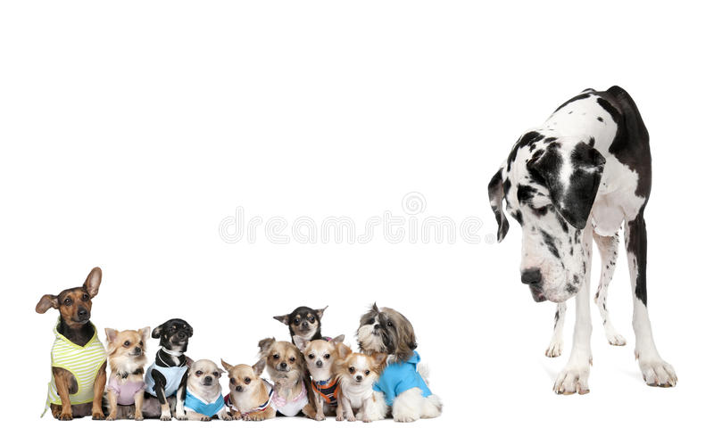 Gruppe Hunde gegen weißen Hintergrund stockfoto