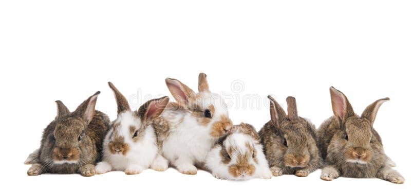 Gruppe Kaninchen in einer Reihe lizenzfreie stockfotos