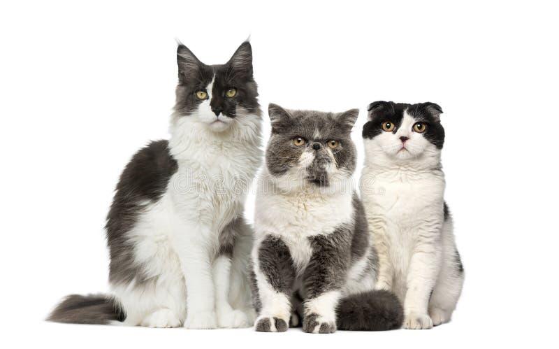 Gruppe Katzen stockfotografie