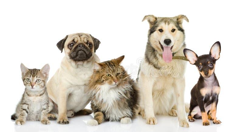 Gruppe Katzen und Hunde in der Front. lizenzfreies stockfoto