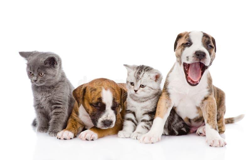 Gruppe Katzen und Hunde, die in der Front sitzen Lokalisiert auf Weiß stockbilder