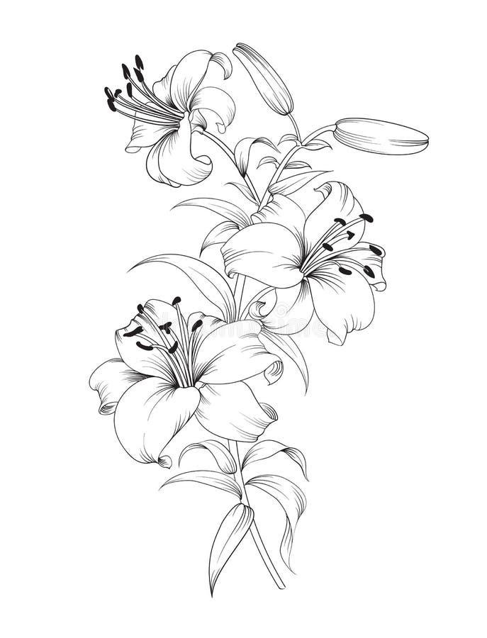Gruppe Lilienblumen lizenzfreie abbildung