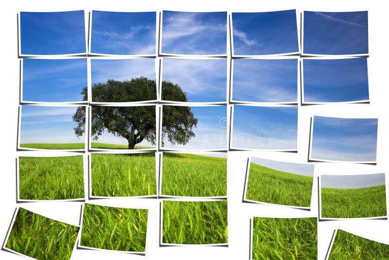 Gruppe mehrfache filmstrips, die eine Landschaft bestehen vektor abbildung
