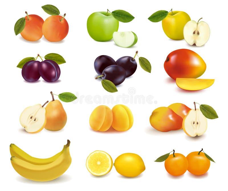 Gruppe mit verschiedenen Sortierungen der Frucht. vektor abbildung