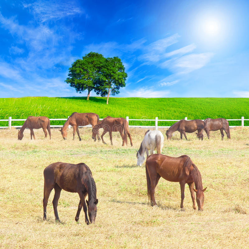 Gruppe Pferde auf einer Wiese im Bauernhof lizenzfreie stockbilder