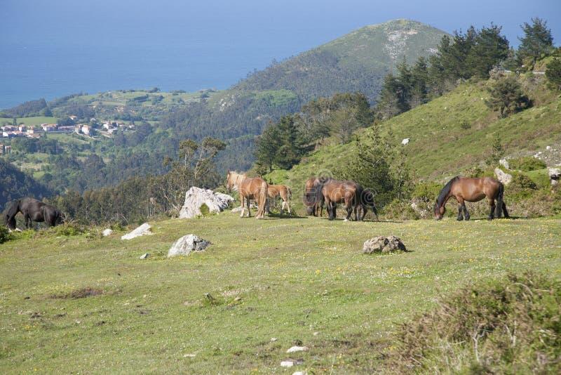 Gruppe Pferde, die jenseits Meer weiden lassen stockfotos