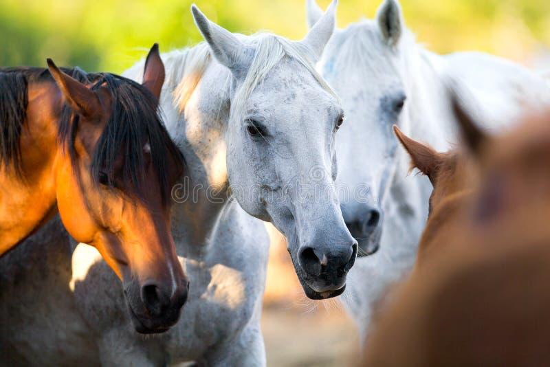 Gruppe Pferde, die zusammen im Freien stehen lizenzfreie stockbilder