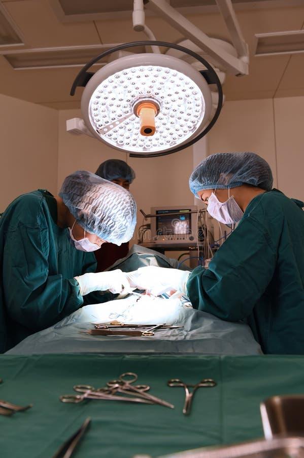 Gruppe Raum der tierärztlichen Chirurgie in Kraft lizenzfreies stockbild