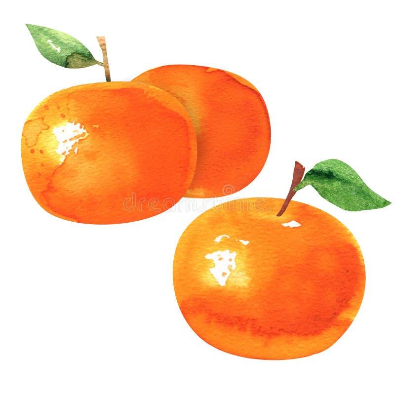 Gruppe reife orange Tangerinen mit Blatt-, Tangerine- oder Klementinenfrucht, Zitrusfrucht, lokalisiert, Handgezogenes Aquarell lizenzfreies stockfoto
