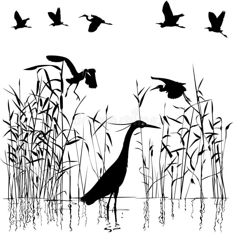 Gruppe Reiher im swampland stock abbildung