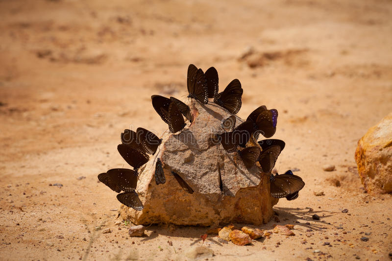 Gruppe Schmetterlinge stockfotos