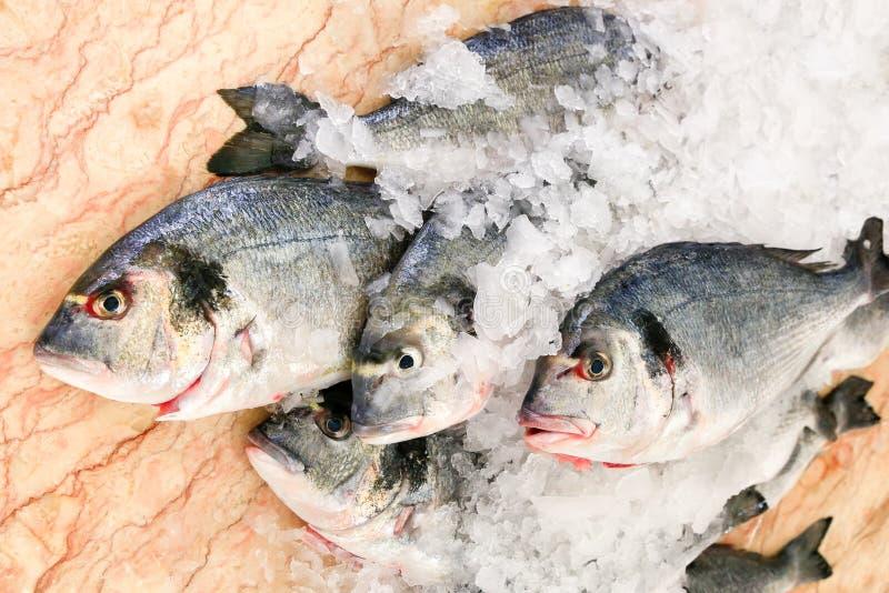 Gruppe Seefische auf Eis am Marmor lizenzfreie stockfotos