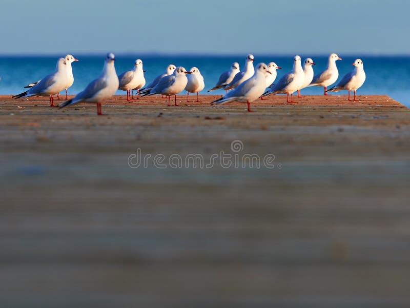 Gruppe Seemöwen stockbild