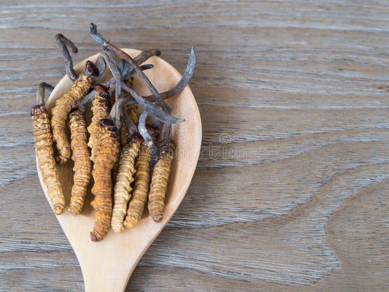 Gruppe sinensis oder Pilz Ophiocordyceps cordyceps dieses ist die Kräuter, die auf hölzernen Löffel auf hölzernem Hintergrund ges lizenzfreie stockfotografie