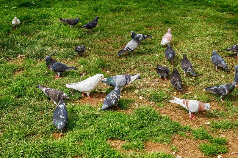 Was Essen Tauben
