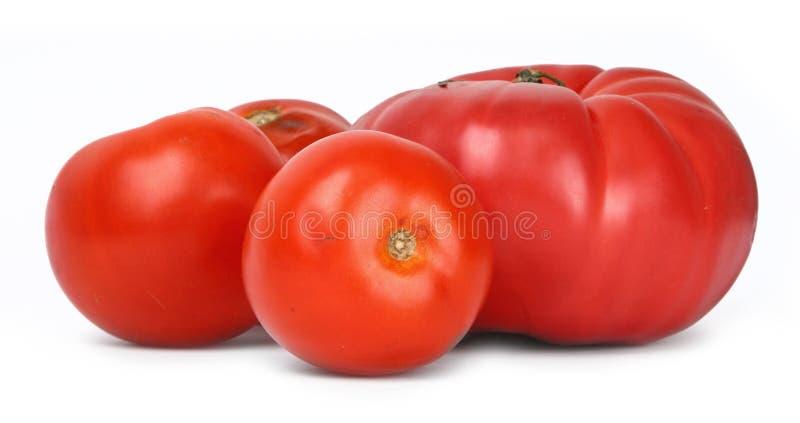Gruppe Tomaten stockfoto