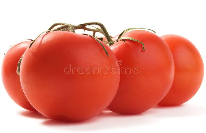 Gruppe Tomaten mit Schatten stockfotos