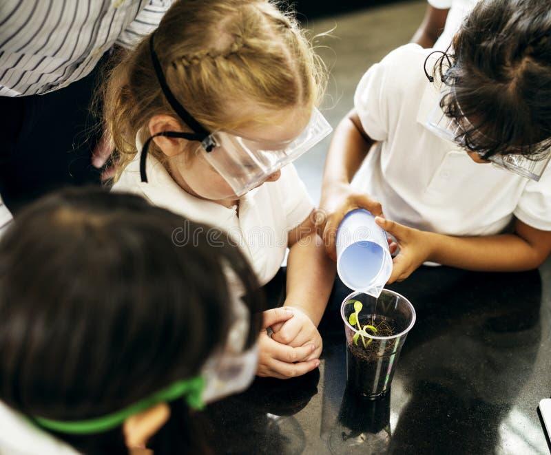 Gruppe verschiedene Kindergartenstudenten, die experim pflanzend lernen stockfotografie