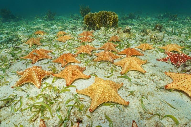 Gruppe von den Starfish Unterwasser auf Meeresgrund stockfotografie