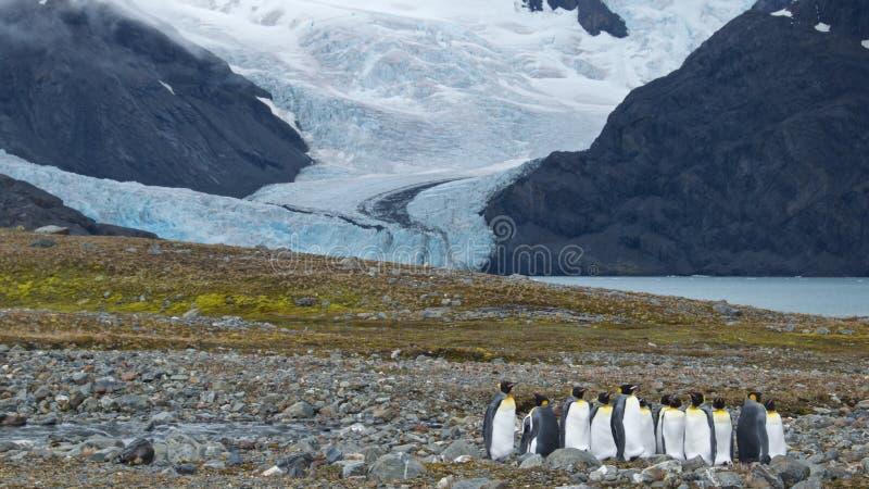 Gruppe von König Penguins lizenzfreie stockbilder